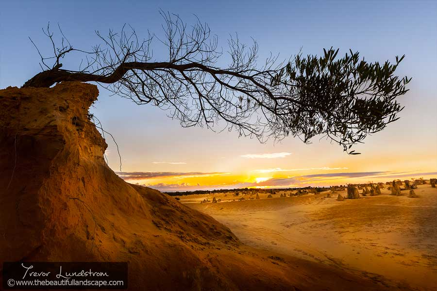 Lying prostrate on top of an eroding dune, this tree clings on for life.